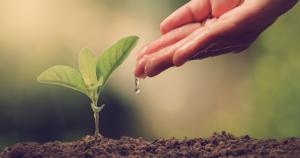 preservar o meio ambiente